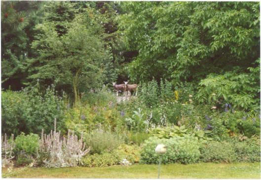 Lammeren in de wei. zomer 2001.