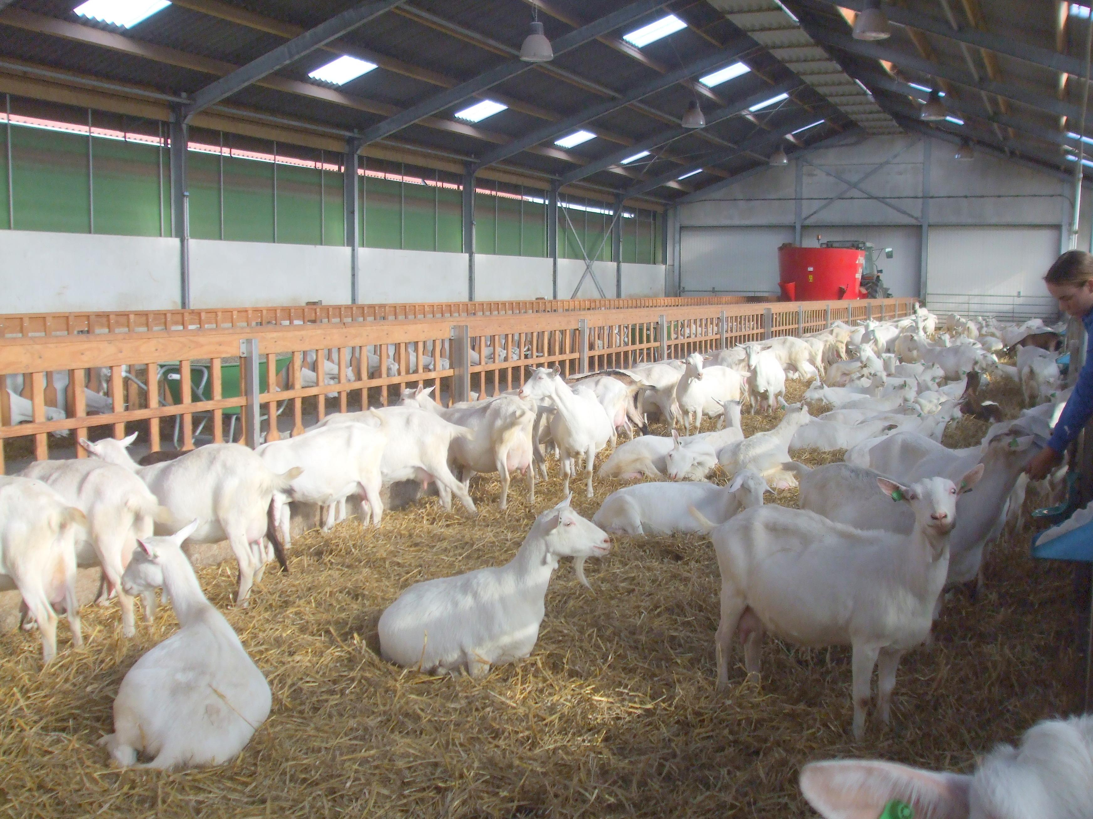 voerhek schapen te koop