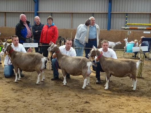 23 augustus 2014 Jubbega; Eigenaarsgroep geiten: 1a. gebr. Popken.