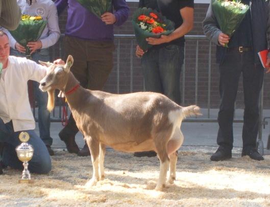 Wie volgt Sweelhoeve Grietje 30 op als algemeen kampioen geiten bij de nationale CW-geitenkeuring in Barneveld?