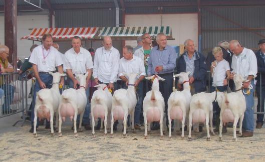 2013 Barneveld; witte geiten geboren in 2011.1a. Boukje 294; 1b. Nooro's Femke R38; 1c. Liesje 26; 1d. Riethoeve Viola 119; 1e. Corrie 167; 1f. Liesje 28; 1g. Ivanbar Trees 80; 1h. Annetje 113.