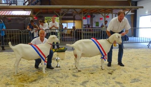 2014 Barneveld; Algemeen kampioen lammeren Marijke 210 van P. van Haperen. Algemeen kampioen geiten Boukje 294 van U. de Vries.