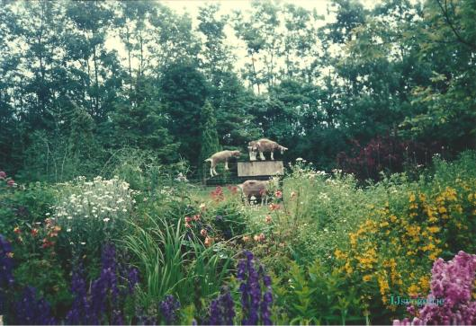 Anne-Geiten in tuin-001