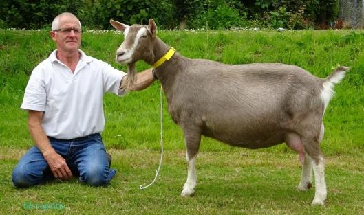 2015 Lexmond; algemeen kampioen geiten Asmi van fam. den Braber.