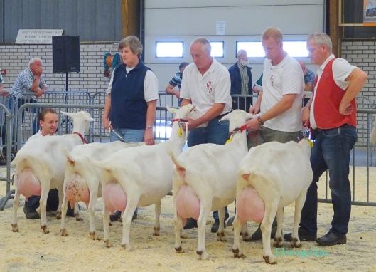 Nationale CW-geitenkeuring Barneveld 2014 ; Rubriek witte geiten geboren in 2009-2010.  1a. Alba's Mariola 8;  1b. Boukje 288;  1c. Marijke 175;  1d. Janneke vd Vriendsenhof;  1e. Elke vd Vriendsenhof.