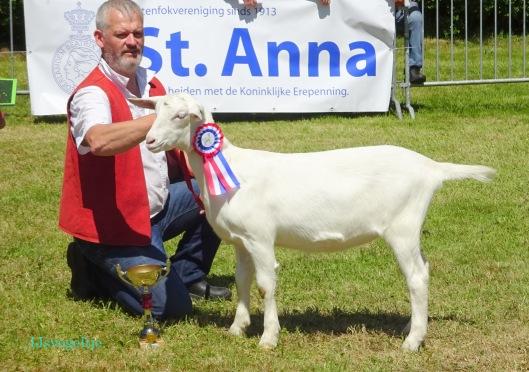 2015 Sint Anna te Gilze; algemeen kampioen lammeren Elke 7 vd Vriendsenhof, G. Vriends.