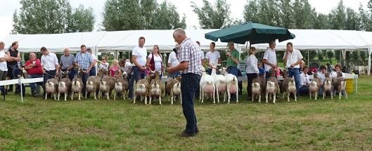 2015 Hoornaar; eigenaarsgroepen geiten.