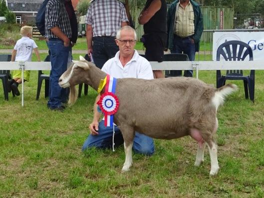 2015 Kringkeuring A&V. Hoornaar; algemeen kampioen geiten Asmi van fam. den Braber.