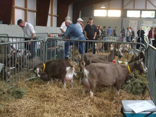 2014 Ermelo; Dag van het Schaap, nu ook met geiten.
