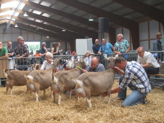 2014 Ermelo; Dag van het schaap, ook met geiten.