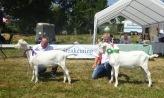 Bokkenkeuring Lexmond 2018. Witte boklammeren Gerko 178 en Tragokeros Vecellinus vd Vriendsenhof