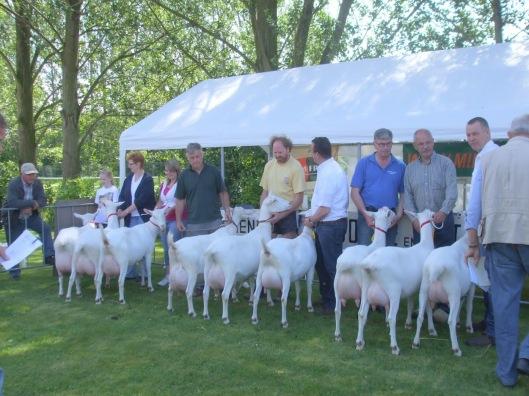 Geitenkeuring Zuidland 2011 eigenaarsgroepen