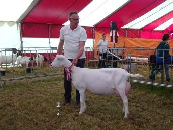 Algemeen kampioen geiten Nooro's Roza 26.