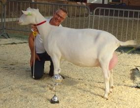 Algemeen kampioen geiten Nooro's Roza 24.