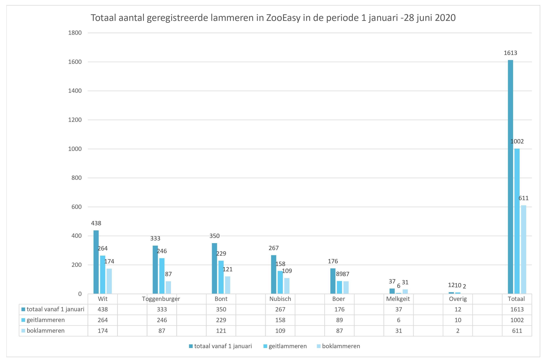 Grafiek van het totaal aantal lammeren 1 januari en 28 juni 2020